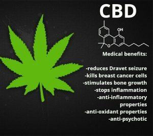 legalize marijuana in Canada