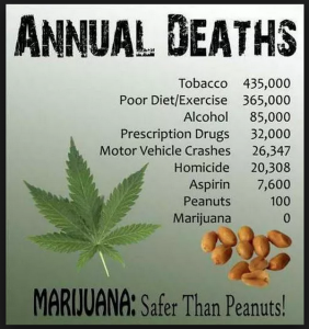 deaths due to peanuts