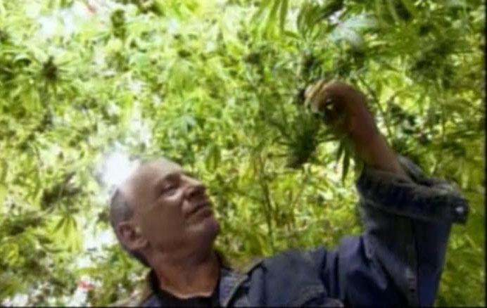 Cannabis treatment for opiates