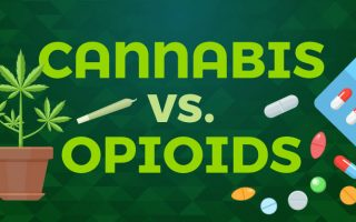 Cannabis treatment for opiates