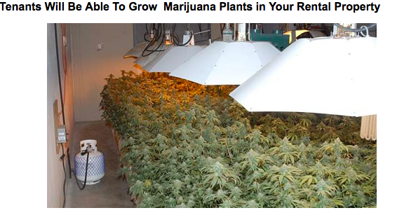 landlords and marijuana